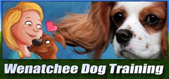 dog training online